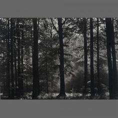 Forest Wallpaper for the Home.