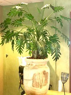 Planten zijn hip, deze planten kunnen zonder water! Wil jij toch ook? Voor info, wee.annefleurs.nl