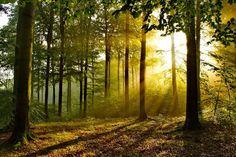 #Nature : 5 faits insolites sur les #arbres et la #forêt