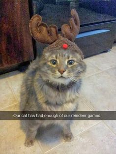 Attack of the funny animals - 58 Pics