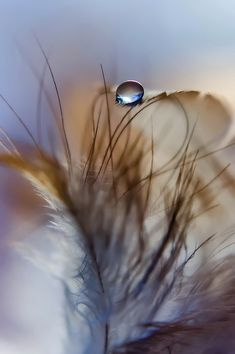 Feather and Droplet by Ja Niis on 500px