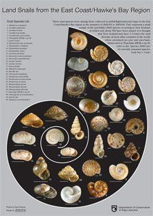 Taranaki Educational Resource: Research, Analysis and Information Network - Snail (NZ Native land snails) Inspiring Things, Room Ideas Bedroom, Conservation, New Zealand, Nativity, Snails, Flora, Posters, East Coast