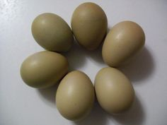 Chicken Scratch Poultry - Olive Egger Dark Green Egg Layer. A cross between the Black Copper Maran and the Ameruacana.