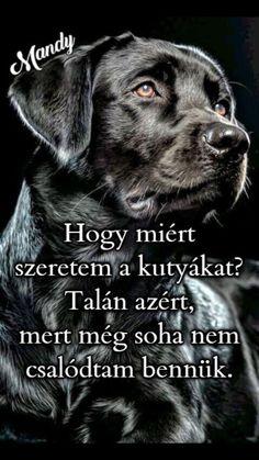 Dog Quotes, Dog Love, Cute Dogs, Bff, Labrador Retriever, Spirituality, Humor, Motivation, Pets