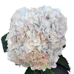 Pale Vintage Hydrangea Flower is a large, fluffy, globe shaped flower that will remind you of clouds scudding across the sky on a spring morning. This jumbo hydrangea is extra large and beautiful; clusters of small, four point flowers snuggle together to create the appearance of one much larger flower head.