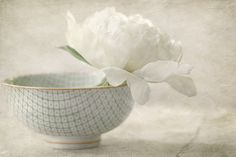 peonie in a bowl
