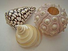 tropische schelpen | Zeeland op foto