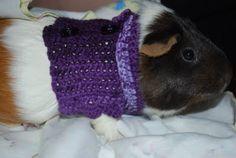 Guinea pig sweater pattern
