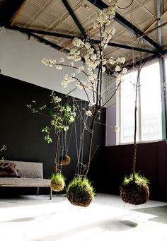 DARK & DELICIOUS INTERIORS - Kokedama (moss ball) string garden by Fedor van der Valk. Dark walls are about drama, so why feature a suspended garden inside, if you have the right kind of light and are handy with a spray bottle? String Garden, Ikebana, Hanging Plants, Indoor Plants, Hanging Gardens, Hanging Orchid, Indoor Trees, Indoor Gardening, Organic Gardening
