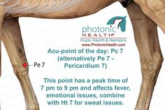 Acu-point of the day: Pc 7 (alternatively Pe 7 - Pericardium 7)  This point has a peak time of 7 pm to 9 pm and affects fever, emotional issues, combine with Ht 7 for sweat issues. http://www.lechevalaunaturel.blogspot.ca/p/blog-page_14.html