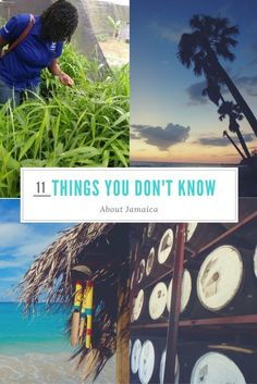 11 things you don't know about Jamaica! | Jamaica Facts | #jamaica #jamaicatravelblog #jamaicatraveltips #jamaicaoffthebeatenpath | jamaica travel tips | attractions in jamaica | things to do in jamaica | jamaica tips for solo travel | Jamaica destination tips | jamaica destination guide