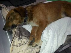 Life With Dogs's photo: Rescuers in Ohio are offering a reward for anyone who has information about a dog that was thrown from a car on Saturday afternoon. Rescuers and veterinarians tried desperately to save the dog, but his injuries were so sever he had to be euthanized. http://www.lifewithdogs.tv/2013/08/rescuers-offer-reward-after-dog-is-thrown-from-car-into-a-culvert/ Pinned 8/5/2013.