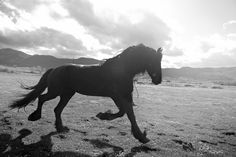 Always love horse pictures. By ulrika kestere
