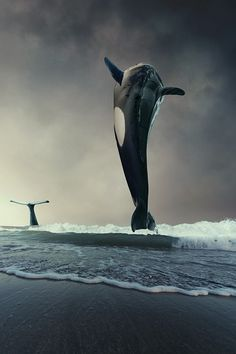 How can that be nice picture but bad photoshop a whale cant just come out of shallow water now can it?