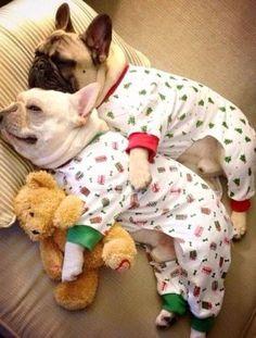 Pijama giydirilmiş yavru bulldoglar için uyku zamanı