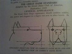 Great Dane Standard Great Dane Facts, Great Dane Dogs, Scooby Doo