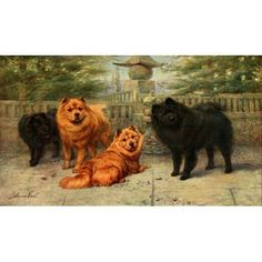 New Book of the Dog 1911 Chow-chows Canvas Art - Maud Earl (18 x 24)