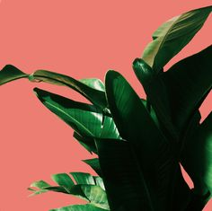 green thumb | green leaves on pink