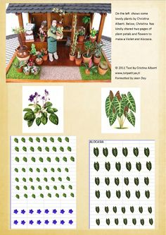 African violet and Alocasia