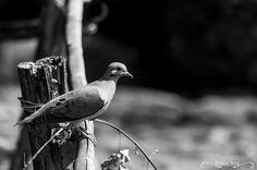 Projeto 365 Inspirações - FOTO 77  #365inspiracoes #pretoebranco #peb #blackandwhite #passaro #bird