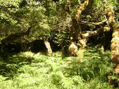 Fairy place in the Burren Co Clare Ireland