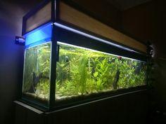 Poissons tropicaux artificielle pour aquarium bassin. 5/m aquarium