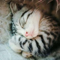 Kitten dreams by wilsonparker on tumblr