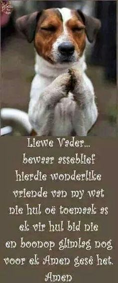 Prayer Quotes, Dog Quotes, Animal Quotes, Cute Quotes, Best Quotes, Funny Quotes, Christian Messages, Christian Quotes, African Jokes