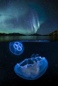 Arctic coast photography - Audun Rikardsen: