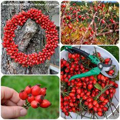 Winter Christmas, Christmas Crafts, Autumn Crafts, Diy Home Crafts, Red Berries, Autumn Inspiration, Hobbies And Crafts, Holiday Parties, Flower Designs