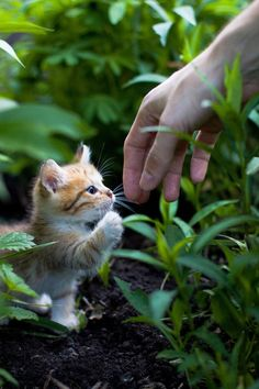 Adorable cute and sweet little kitty try to hand shake ....