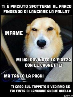 Ti è piaciuto sfottermi al parco Funny Video Memes, Funny Jokes, Hilarious, Memes Humor, Animal Memes, Funny Animals, Funny Images, Funny Pictures, Italian Memes