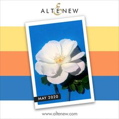 I Card Everyone : May 2020 Altenew Inspiration Challenge Liquid Watercolor, Watercolor Brushes, Watercolor Art, Large Flowers, Blue Flowers, Peruvian Lilies, 30 Gifts, Altenew, Watercolor Background