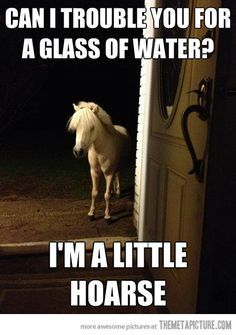 Neighborly Horse