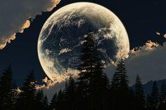 Zie de maan schijnt door de bomen...  LOL I don't know what that says but this is GORGEOUS!