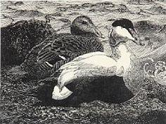 Johannes Larsen  Edderfugle par (Pharyah)