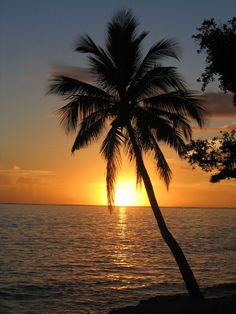 coconut palm tree at sunset - nice! I love photos of palm trees. I was surprised to learn there are species. Florida is palm tree heaven. Florida Palm Trees, Palm Tree Sunset, Palm Trees Beach, Sunset Beach, Beautiful Sunset, Beautiful Beaches, Coconut Palm Tree, Tree Wallpaper, Summer Wallpaper