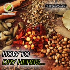 To Dry Herbs. I prefer natural air drying. To Dry Herbs. I prefer natural air drying.To Dry Herbs. I prefer natural air drying. Herbal Remedies, Natural Remedies, Homemade Spices, Herbs Indoors, Dehydrated Food, Drying Herbs, Food Hacks, Food Tips, Different Recipes