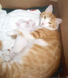 KT and his mom (I used to feed her on my balcony before she got pregnant). He was an only child . Only Child, Getting Pregnant, Green Eyes, Cool Cats, Balcony, Mom, Children, Animals, Fit Pregnancy