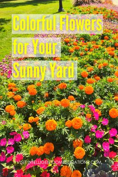 15 annual flowers that will thrive in a sunny locations. Plant any of these annual flowers from seed or plants to create a colorful flower bed in a sunny location. #curbappeal #flowerbed Diy House Projects, Cool Diy Projects, Craft Projects, Full Sun Flowers, Colorful Flowers, Decor Crafts, Diy Home Decor, Household Cleaning Tips, Annual Flowers