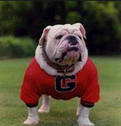 Georgia bulldog!