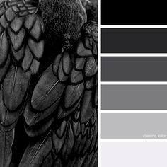 Shades Of A Black Bird (Photo Credit: babblzoom.tumblr.com) #chasingcolor #colorthemes #colorful #color #palette #colorpalette #shades #tones #hues #colorinspiration #inspiration #creative #art #photography #design #theme #bird #blackbird #crow #raven #black #feathers