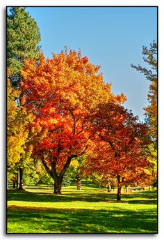 Finch Arboretum in Spokane by Roger Lynn