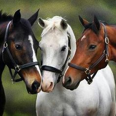 For three friends that are horse crazy Most Beautiful Animals, Beautiful Horses, Beautiful Creatures, Beautiful Babies, Beautiful Images, Horse Photos, Horse Pictures, Animal Pictures, Animals And Pets
