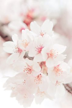 New Nature Wallpaper Iphone Cherry Blossoms Pink Flowers Ideas Frühling Wallpaper, Spring Wallpaper, Flower Wallpaper, Nature Wallpaper, Wallpaper Backgrounds, Heart Wallpaper, Iphone Backgrounds, Iphone Wallpapers, Cherry Blossom Wallpaper Iphone