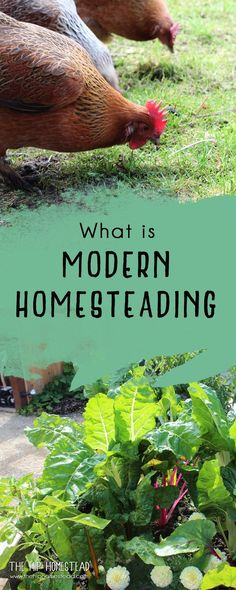 Modern Homesteading - The Hip Homestead #homestead #modernhomesteading