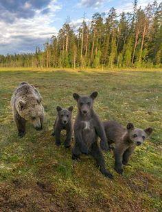 Rankan tarinan herkät karhukuvat - Kotimaa - Ilta-Sanomat