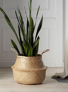42 cm diameter x 34 cm high Natural seagrass basket Plant Basket, Basket Planters, Wicker Baskets, Decoration Plante, Basket Decoration, House Plants Decor, Plant Decor, Bathroom Plants, Interior Plants