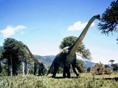 Brachiosaurus/ Dinosaur appeared in the movie Jurassic Park wiki Walking With Dinosaurs, Dinosaur Art, The Good Dinosaur, Dinosaur Train, Jurassic World, Jurassic Park, Dragons, Dinosaur Wallpaper, Dinosaur Discovery
