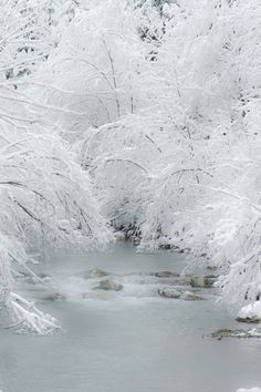 Softness of Winter
